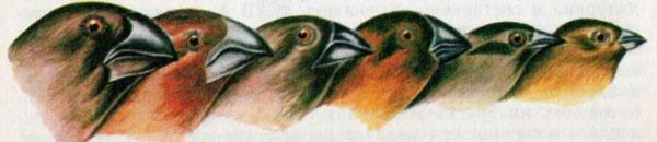 Галапагосские вьюрки вовсем своем разнообразии