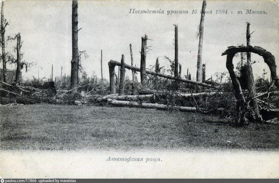 Анненгофская роща после урагана 1904 г. в Москве